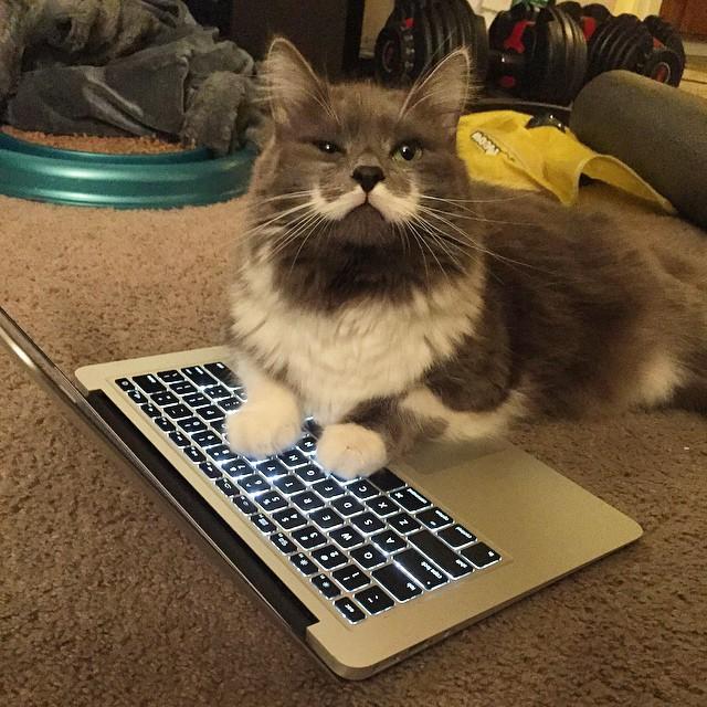 해밀턴 (@hamilton_the_hipster_cat)