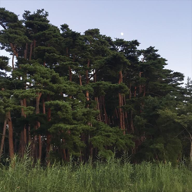 강릉 더는 서울에 살고 싶지 않다는 확신이 굳어가던 2016년 여름, 셀 수 없을 만큼 여러 번 강릉에 갔다. 차를 타고 2시간 남짓 달리면 닿을 수 있는 곳. 인적 없는 바다와 쓸쓸하고 아름다운 허난설헌 생가 뒤로 3000그루의 소나무 숲을 만났다. 여전히 서울에서 삶을 이어갈 수 있는 건 마음의 고향을 강릉으로 삼은 덕분.