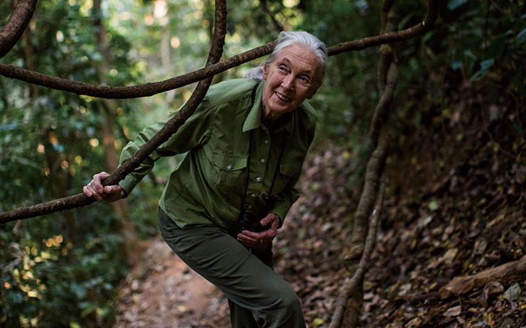 지구상에서 가장 유명한 동물학자이자 환경운동가 제인 구달. 지금 이 순간에도 그녀는 세상을 관찰하고 탐험하는 중이다.