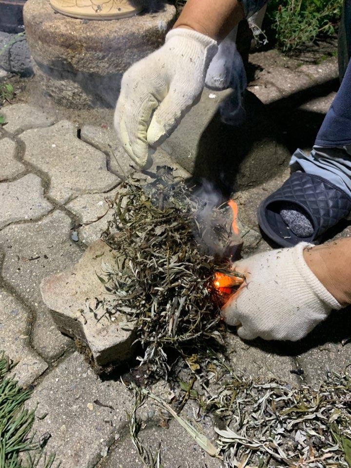 말린 쑥을 태워 피우는 자연 모기향