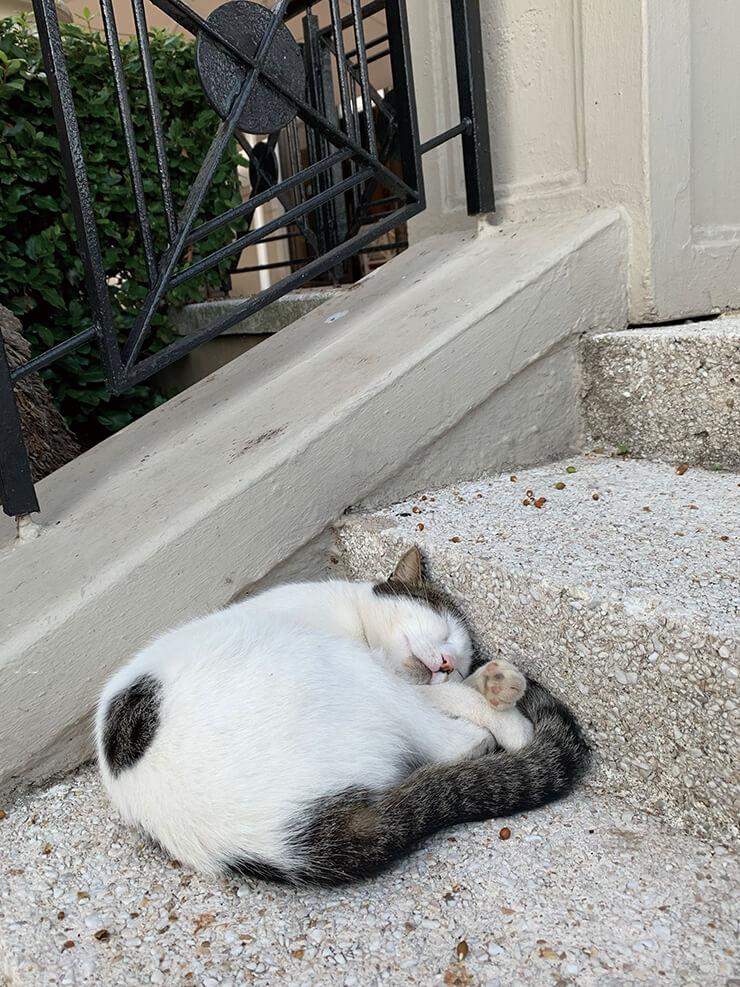 이스탄불에서 어디를 가도 사람을 경계하지 않는 평화로운 고양이를 만날 수 있다.
