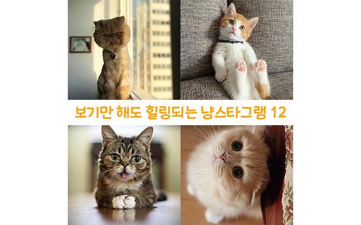 오늘도 냥스타그램을 검색하는 당신에게 추천하는 세계에서 가장 예쁜 고양이 인스타그램 계정 12. 함부로 클릭하지 말 것. 출구는 없으니까.