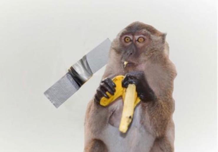 세상에서 가장 유명한 바나나의 천적 @thomaslelu