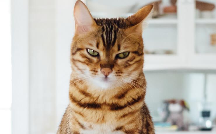 고양이는 그간의 모진 박해에도 꿋꿋이 살아남았다. 호랑이가 사라진 도시에서 영역을 확장하며 우리의 공간, 우리의 라이프스타일을 조금씩 고양이 중심적으로 변화시키고 있다.