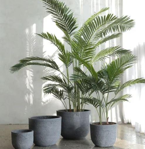 대나무 야자(Bamboo Palm)
