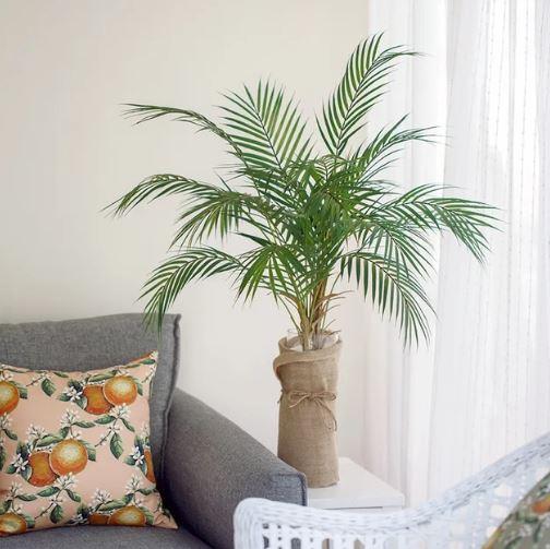 아레카 야자(Areca Palm)