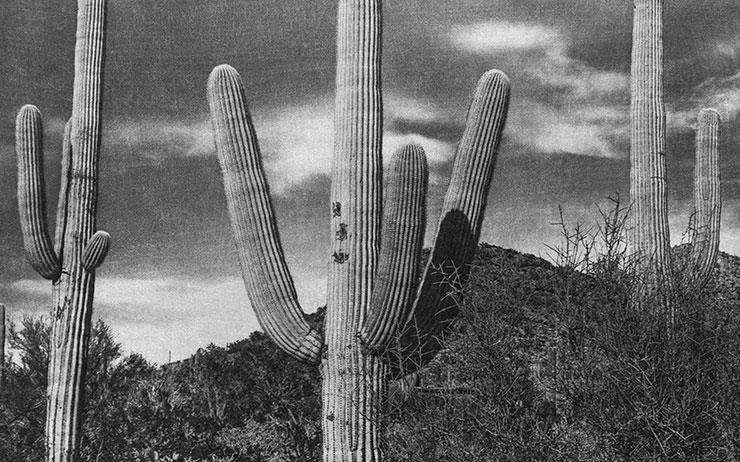 사진가 이정진이 땅 위에서 채집한 광활한 흑백 풍경 앞에 서면 주위의 소리가 멀어진다.