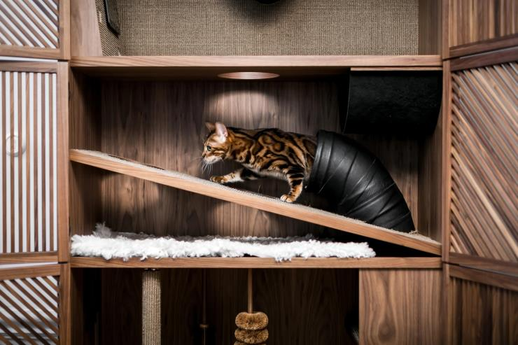 Cat Flat