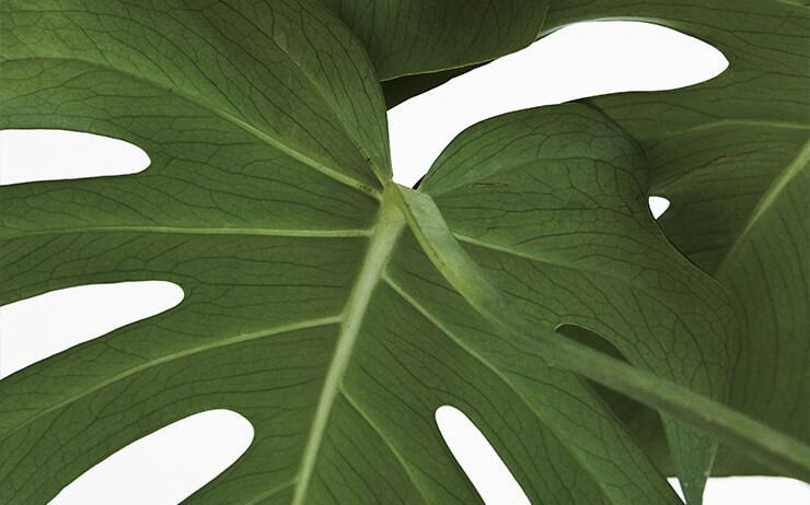 그저 화초라고 표현하기엔 아쉬움이 느껴지는, 우리와 함께 숨 쉬고 살아가는 반려식물들.