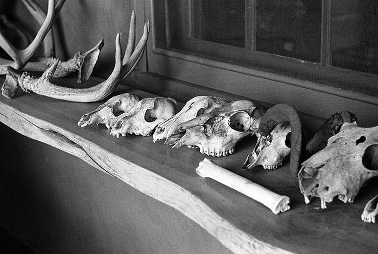 멕시코에 정착했을 때 그녀의 최대 관심사였던 동물의 뼈.