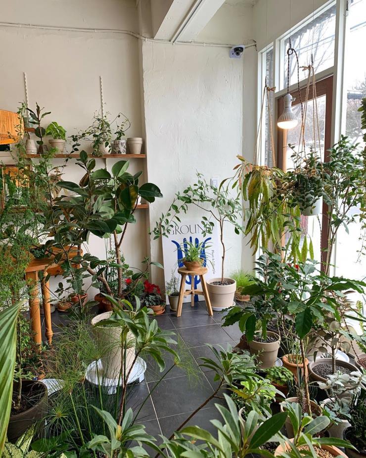 @plantspace_ground