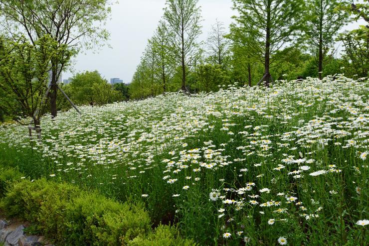 사진출처 한밭수목원