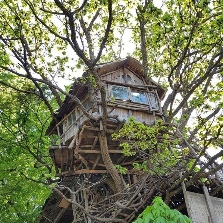 @mizuno_tree_house