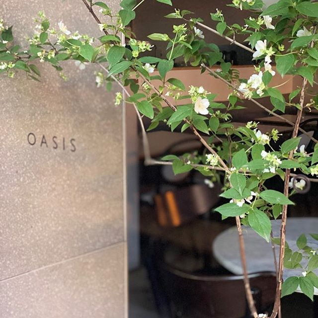@oasisbrunch