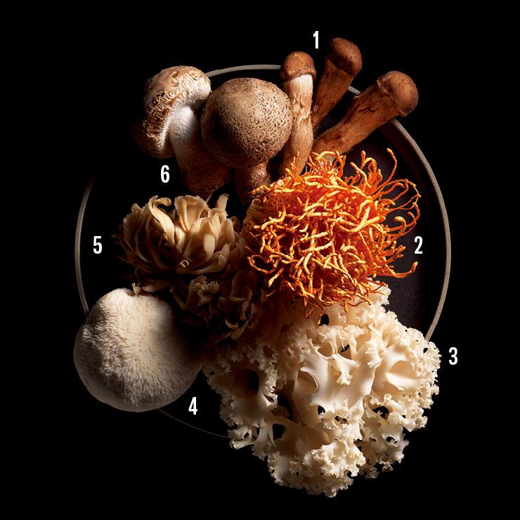 1 참송이버섯. 2 동충하초. 3 꽃송이버섯. 4 노루궁뎅이버섯. 5 잎새버섯. 6 송미향 버섯.
